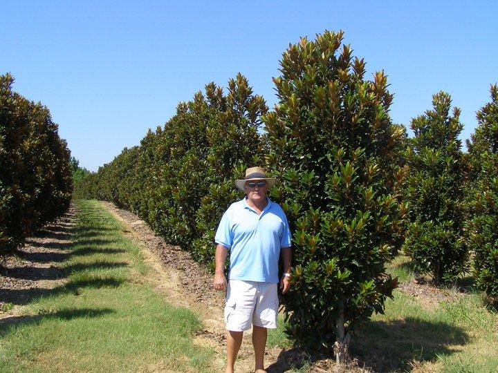 10ft Alta Magnolia